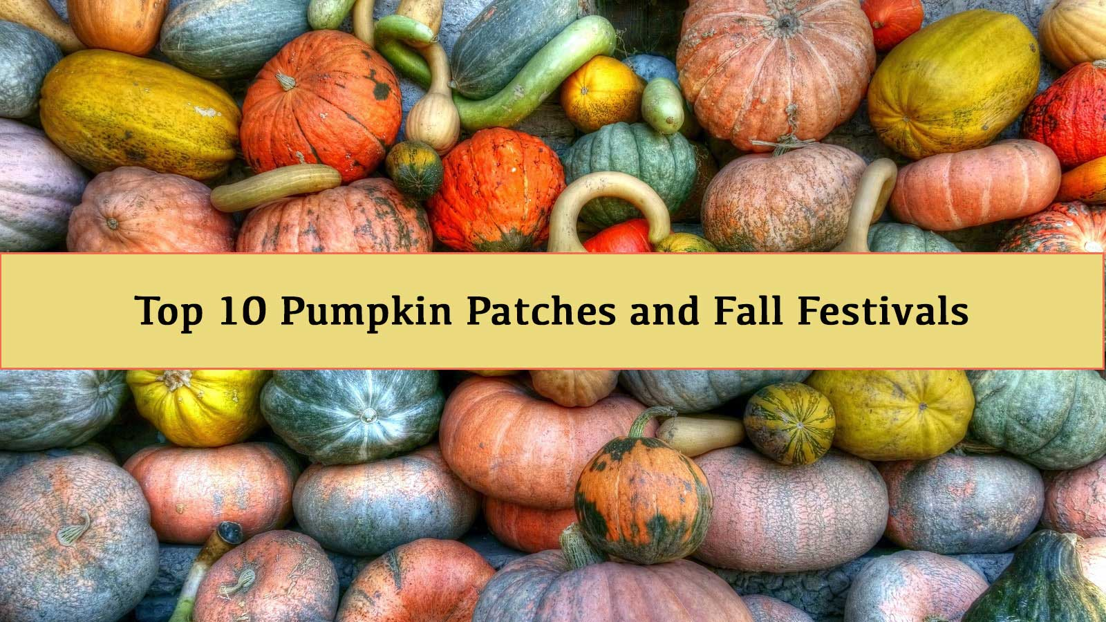 pumpkin patch germantown